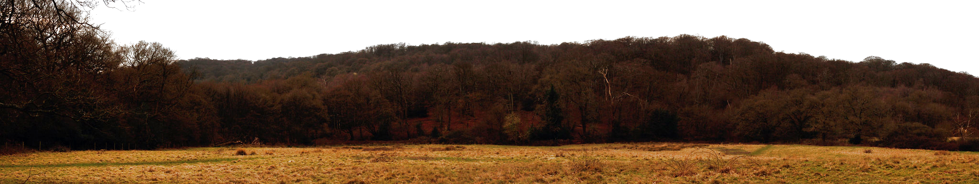 Epping Forest,near Debden (Epping Forest near Debden by chiron3636 on Flickr.com, CC BY 2.0)